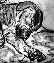 Load image into Gallery viewer, Boxer Dog Puppy art print, charcoal sleeping boxer pup drawing giclee print of Original dog portrait, boxer dog gift ,drawing boxer print - Dog portraits by Oscar Jetson
