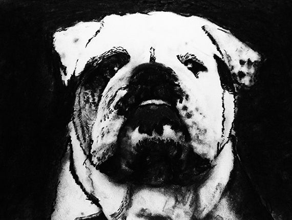 Bulldog charcoal drawing giclee print of Original charcoal bulldog portrait, English bulldog gift ,pet,black and white drawing bulldog print - Dog portraits by Oscar Jetson