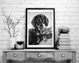 Dachshund charcoal drawing giclee print of Original charcoal Dachshund portrait, Dachshund gift ,pet,black and white drawing Dachshund print - Dog portraits by Oscar Jetson - 2