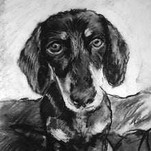 Load image into Gallery viewer, Dachshund charcoal drawing giclee print of Original charcoal Dachshund portrait, Dachshund gift ,pet,black and white drawing Dachshund print - Dog portraits by Oscar Jetson