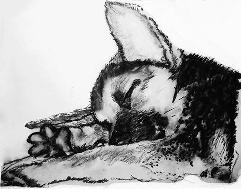 Husky Puppy print, charcoal Husky drawing, Husky dog gift, giclee print,dog portrait, Husky dog gift ,drawing Husky print - Dog portraits by Oscar Jetson
