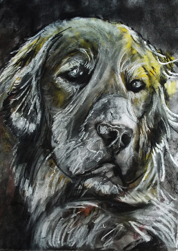 Golden retriever print, charcoal Golden retriever drawing,dog gift, giclee print,dog portrait, golden retriever dog print - Dog portraits by Oscar Jetson
