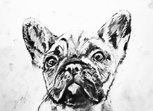Load image into Gallery viewer, French bulldog print, charcoal french bulldog drawing,dog gift, giclee print,dog portrait, frog dog, frenchie, french bulldog print - Dog portraits by Oscar Jetson