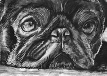 Load image into Gallery viewer, Pug lover gift idea Black and white Print , Charcoal art  print Pug Dog portrait, pug picture,Signed Pug Art ,pug lover, pug wall art print - Dog portraits by Oscar Jetson