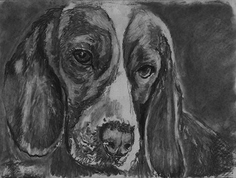 Beagle Dog charcoal drawing giclee print, Black dog portrait, Beagle gift , Beagle dog black and white drawing Beagle wall art print - Dog portraits by Oscar Jetson