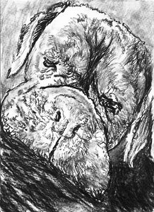 Boxer Dog drawing,charcoal boxer dog art print,charcoal Boxer dog, lazy sleeping Boxer dog portrait, Boxer dog owner gift ,Boxer dog drawing - Dog portraits by Oscar Jetson