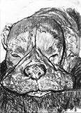 Boxer dog charcoal print, Boxer dog portrait, black and white charcoal boxer drawing,Boxer dog gift, dog lover gift ,Boxer dog drawing print - Dog portraits by Oscar Jetson - 1