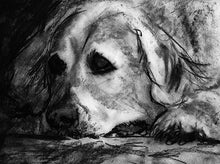 Load image into Gallery viewer, Golden retriever dog print, charcoal Golden retriever drawing, Goldie dog gift, dog portrait, retriever gift ,drawing golden retriever print - Dog portraits by Oscar Jetson