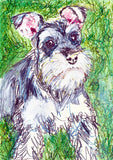 Schnauzer painting, dog Painting, Schnauzer  Print , watercolor, art  print, Schnauzer Dog Art, 8x10, 11x14 wall art print - Dog portraits by Oscar Jetson