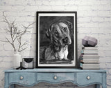 Black lab, Labrador drawing, Charcoal art print, Dog portrait, Labrador dog gift, Lab picture,dog wall art, Lab dog gift Labrador print - Dog portraits by Oscar Jetson - 1