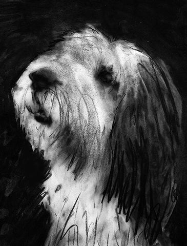 Old English Sheepdog Gift, dog drawing, Charcoal art portrait, sheep dog, sheepdog picture,old english sheep dog gift wall art print - Dog portraits by Oscar Jetson