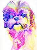 Shih Tzu painting wall art print colorful Shih Tzu Dog print - Dog portraits and dog gifts