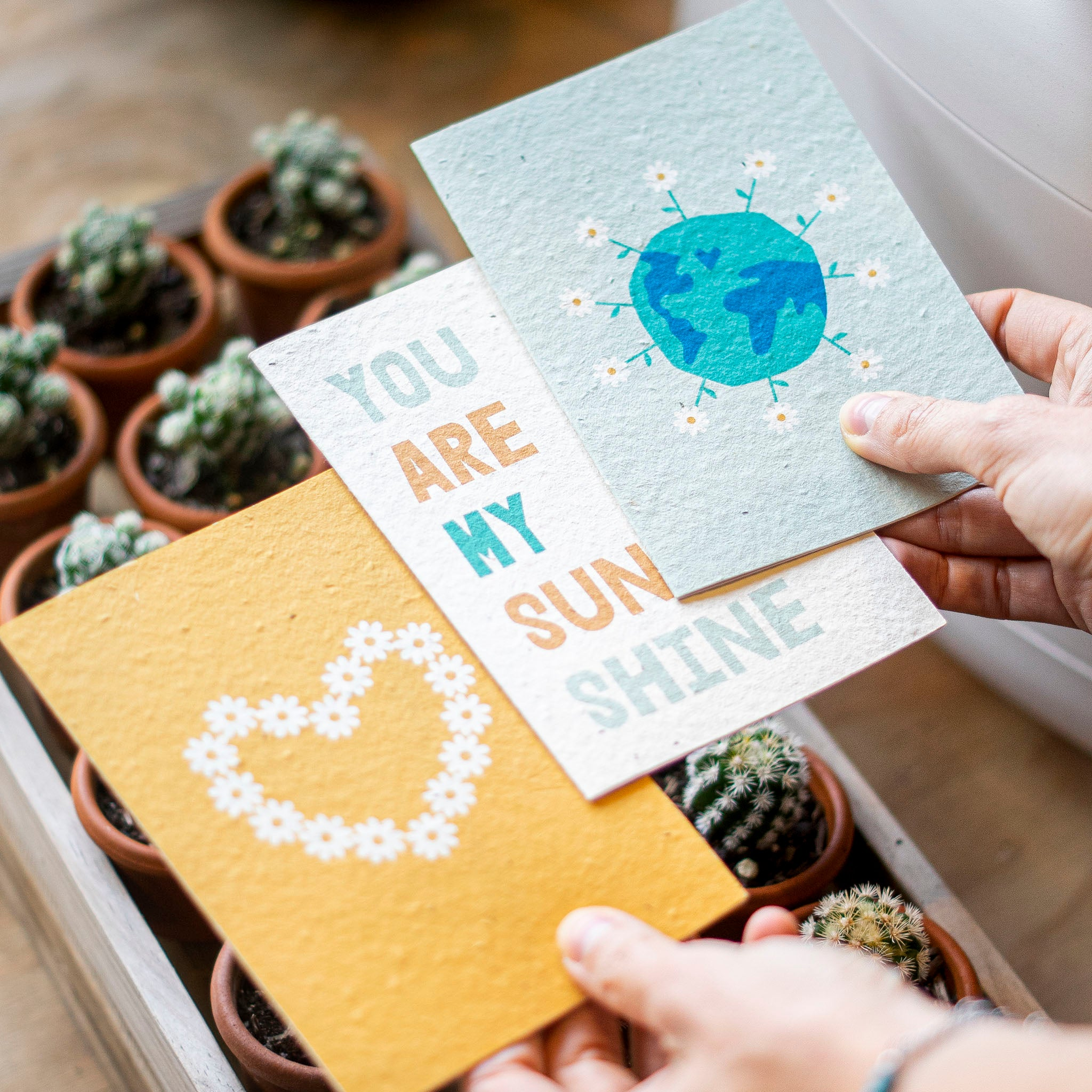 Turquoise Creative three plantable cards that bloom into daisies