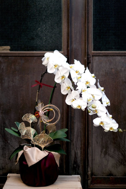 Lucky Orchid - #hapi Fish-flower