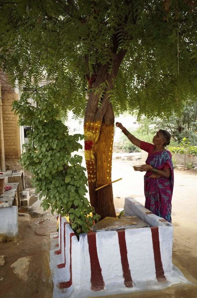 Neem trees are believed to protect against evil