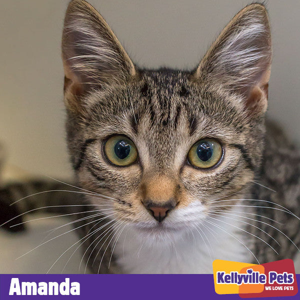 Amanda has found her Purrfect Partner