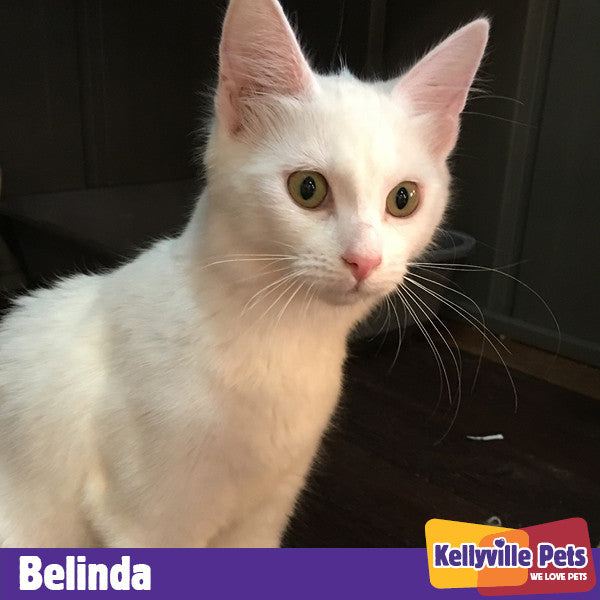 Belinda has found her Purrfect Partner