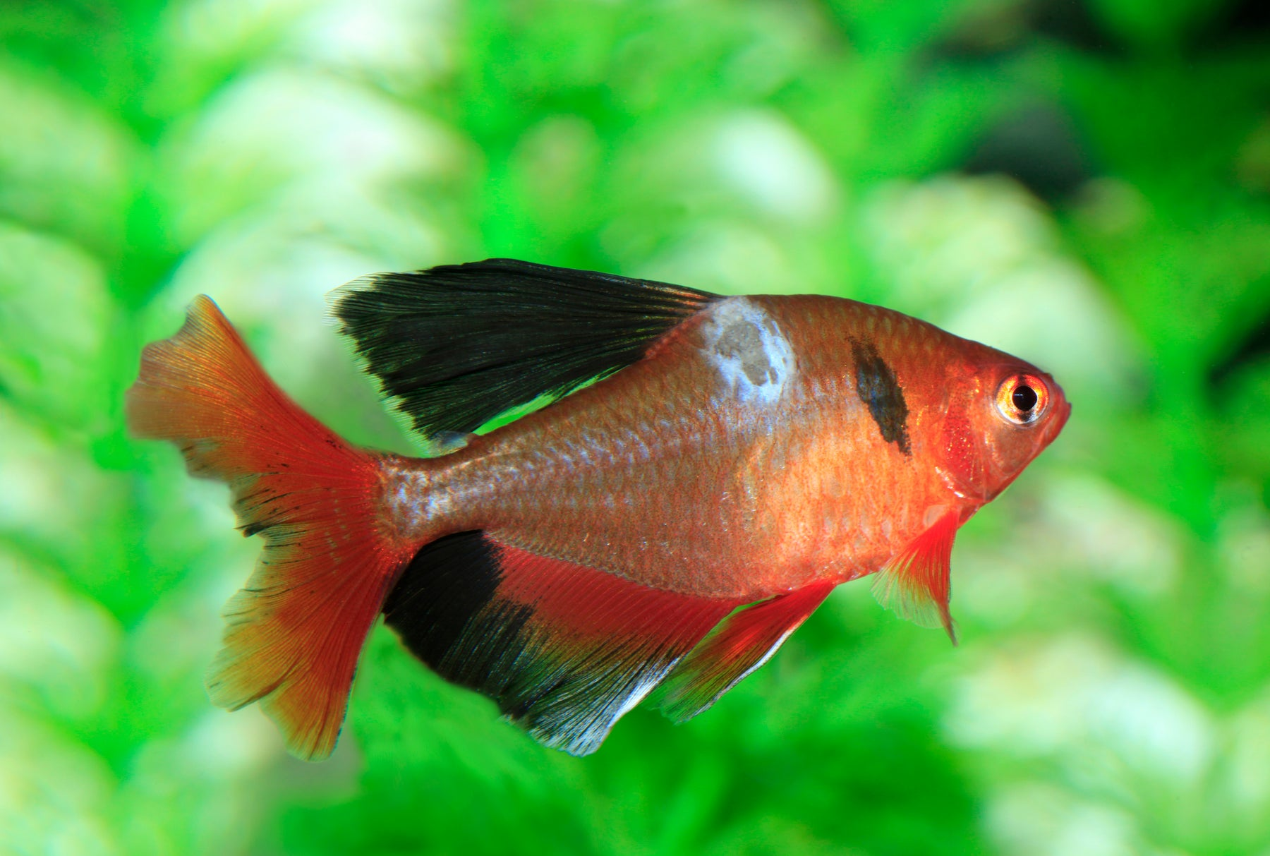 How do I know if my fish are sick?