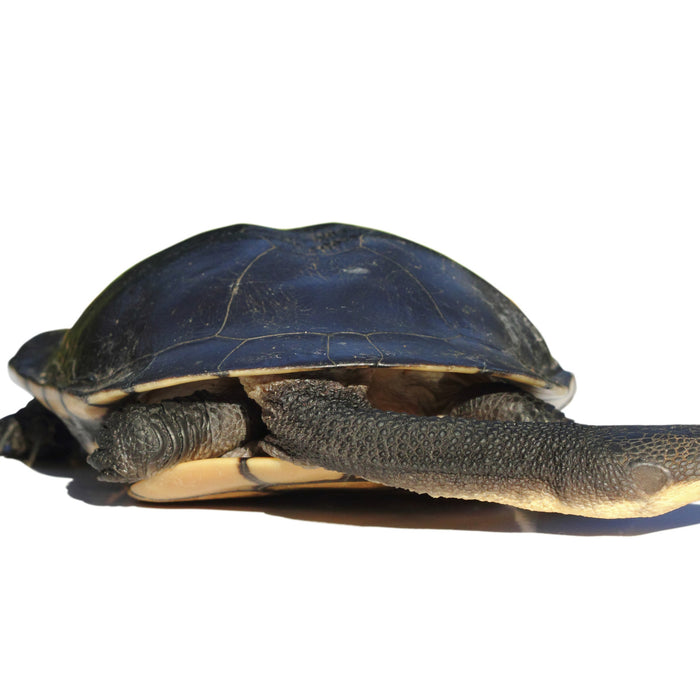 Ten Turtle Facts You May Not Know