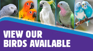 View Our Birds Available
