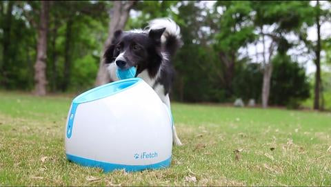 Ifetch Too Ball Thrower For Large Dogs