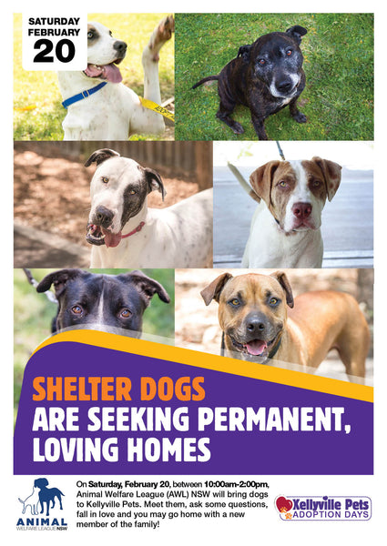 Shelter dogs are seeking permanent, loving homes