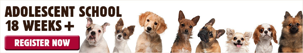 Adolescent Dog School classes at Kellyville Pets