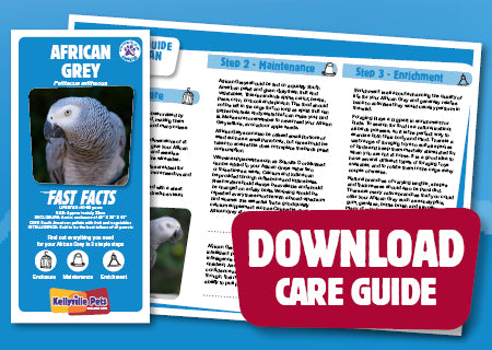 Download African Grey Care Guide