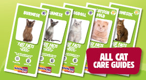 How to look after your pet cat. View all cat care guides here.