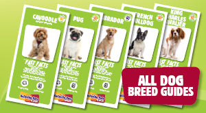 Back to All Dog Breed Guides