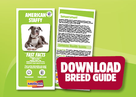 Download American Staffy breed guide