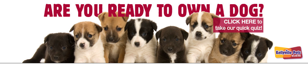 Are You Ready For A Puppy Fact Sheet Kellyville Pets