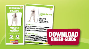 Download Australian Bulldog breed guide