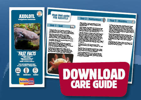 Download Axolotl care guide