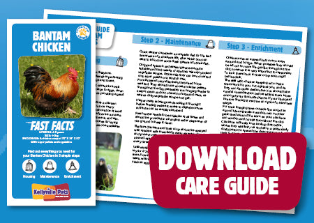 View Bantam Chicken Care Guide