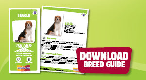 Download PDF Beagle Breed Guide