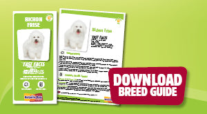 Download Bichon Frise breed guide