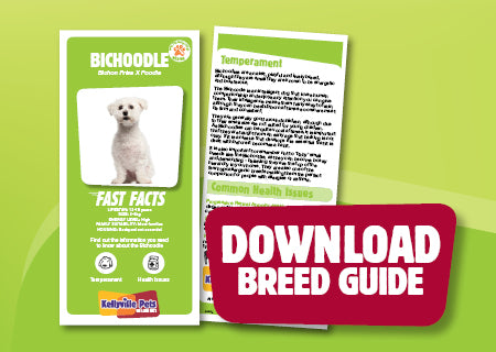 Download Bichoodle breed guide