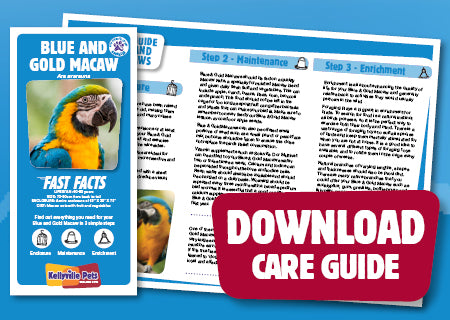 View Blue & Gold Macaw Care Guide