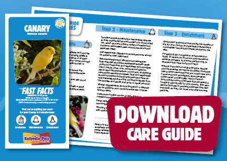 View Canary Care Guide