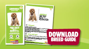 Download Cavoodle breed guide