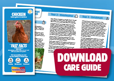 View Chicken Care Guide