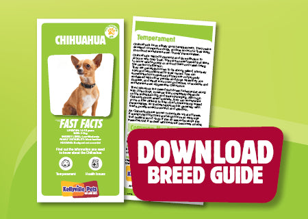 Download Chihuahua breed guide
