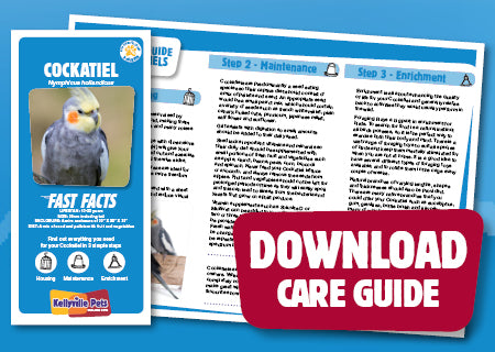 View Cockatiel Care Guide