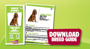 Download Cocker Spaniel breed guide