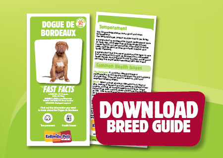 Download Dogue de Bordeaux breed guide