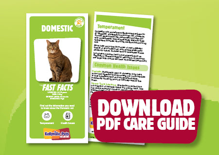 Download Domestic PDF care guide