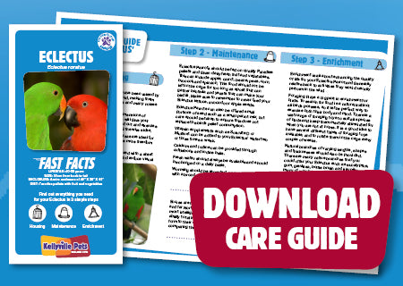 View Eclectus Care Guide