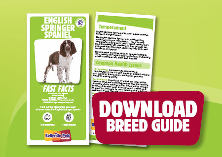 Download English Springer Spaniel breed guide