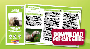 Download Ferret PDF care guide